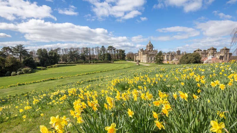 Daffodils at Castle Howard in Yorkshire