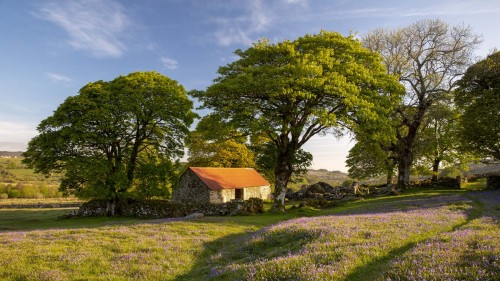 Emsworthy Barn amongst the bluebells on Dartmoor