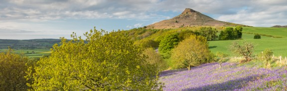 Bluebells at Roseberry Topping in Yorkshire